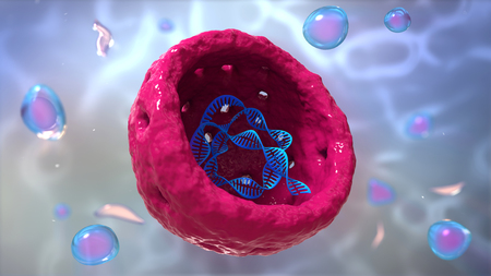 Nucleus, Nucleolus, human body cell. Nucleus of the eukaryotic cell. In this figure it is visible the DNA