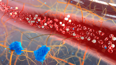 inside the blood vessel, white blood cells inside the blood vessel, High quality 3d render of blood cells, Red and white blood cells in artery