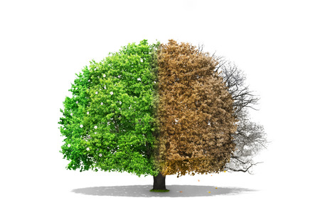 Concept of regeneration. The image of the seasons on the same tree. Concept of seasons. Changes. Isolated on white background.