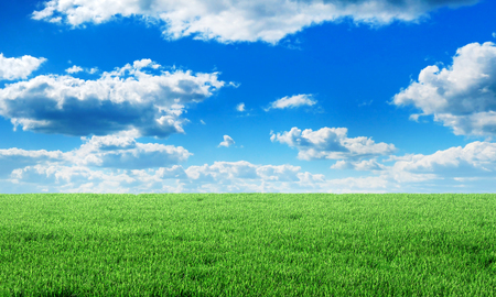 Green field under blue sky with clouds. Beauty wallpaper.