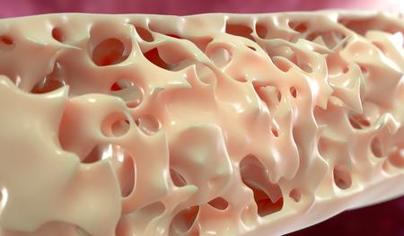 3d render medical illustration of the bone structure
