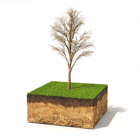 Eco concept. Cross section of ground with tree without leaves on a white. 3d illustration Stock Photo