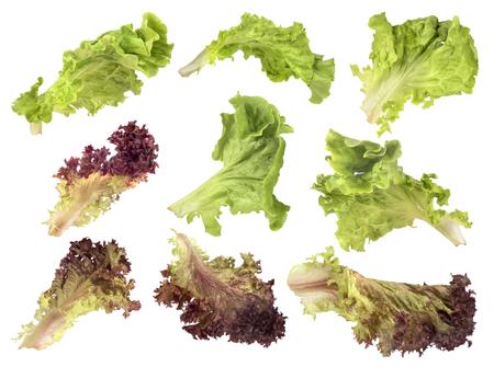 vibrat color: Set salad on white background