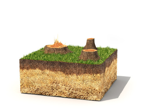 Eco concept. Cross section of ground with tree stumps. 3d illustration
