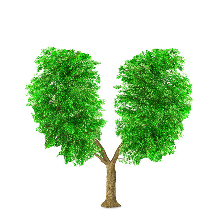 The green tree have a shape of human lungs isolated on a white background.