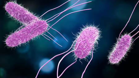 3D illustration of Salmonella Bacteria. Medicine concept.