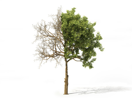 Realistic tree half covered of leaves isolated on a white. 3d illustration 版權商用圖片 - 96635565