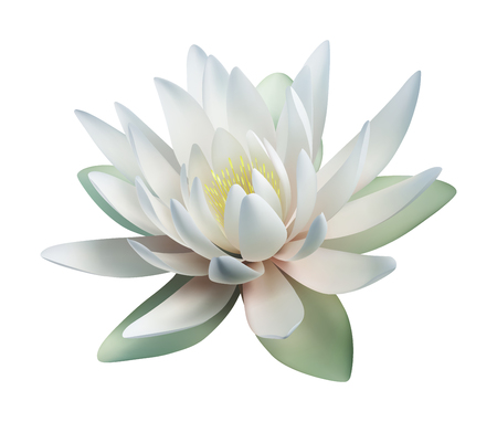Lotus flower isolated on white. Vector illustration  イラスト・ベクター素材