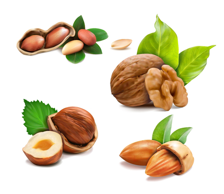 Vector illustration mix of different types nuts on a white background