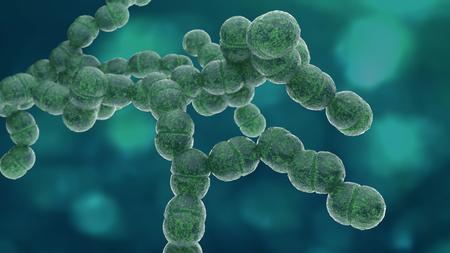 Diplococcus bacteria