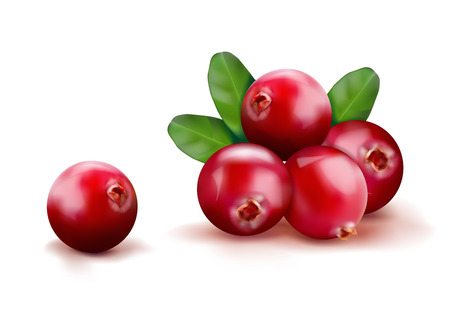 Ripe red cranberries with leaves. Vector illustration