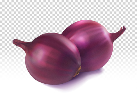 Red onion on a transparent background. Vector realistic illustration