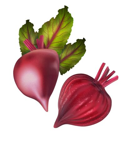Ripe beet cut in half with green leaves. Vector realistic illustration isolated on white background.