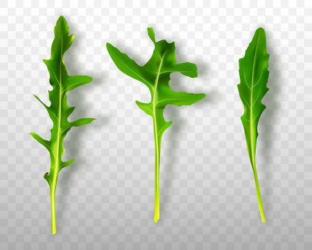 Green fresh rucola or arugula leaves isolated on transparent background