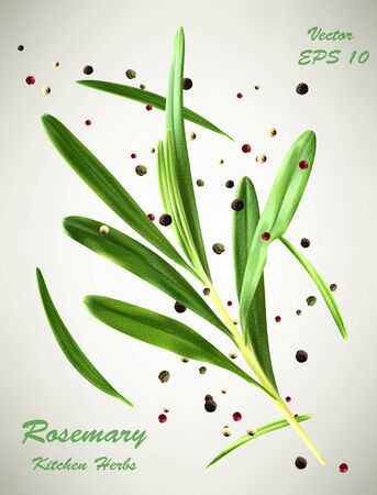 Vector illustration of green rosemary branch and spices