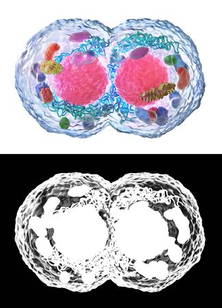 Biology concept. Cell division under the microscope isolated on a white with alpha map.  3d illustration Фото со стока