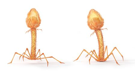 Microbiology concept. Bacteriophages isolated on a white background. 3d illustration 写真素材