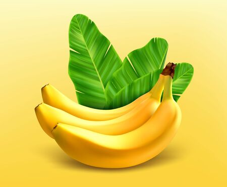 Bunch of bananas. Bananas with leaves isolated on yellow background. Vektoros illusztráció