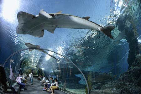The Siam Ocean World Aquarium in the capital Bangkok of Thailand in South East Asia
