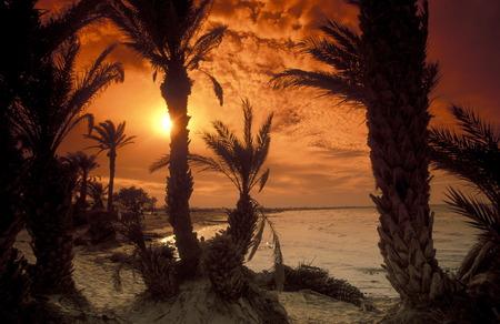 アフリカ、チュニジアの JerbaEin 島のビーチ