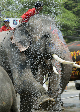 The Songkran festival or Thai New Year water festival to is in full swing north of Bangkok in Ayutthaya Thailand in Southeast Asia