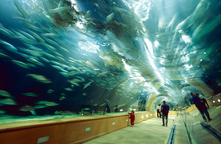 One of two underwater tunnels of the Oceanographic Park south-west of the city center of Valencia