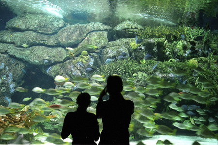 oceanographic: One of two underwater tunnels of the Oceanographic Park south-west of the city center of Valencia