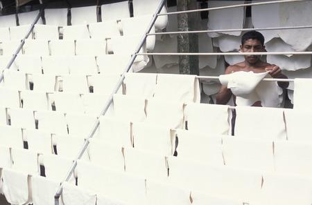 gummi: Asien, Indischer Ozean, Sri Lanka, Ein Mann laesst den frischen Gummi an der Luft trocknen, muore in einer Kautschuk Plantage fuer die Porduktion von Gummi beim Kuestendorf Hikkaduwa an der Suedwestkueste von Sri Lanka. (URS FLUEELER) Editoriali