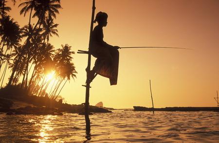 asien: Asien, Indischer Ozean, Sri Lanka, Traditionelle Fischer sogenannte Stelzenfischer beim Fischen in der naehe des Kuestendorf Ahangama an der Suedkueste von Sri Lanka. (URS FLUEELER)