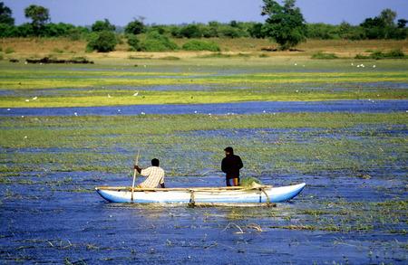 asien: Asien, Indischer Ozean, Sri Lanka, Traditionelle Fischer auf dem Wirawila Wewa See an der Suedkueste von Sri Lanka. (URS FLUEELER)