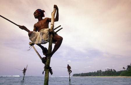 Fisherman fishing on traditional art at Weligama in sueden the island of Sri Lanka in the Indian Ocean