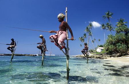 A stilt fishermen on the beach of Weligama in sueden of Sri Lanka in Asia Редакционное