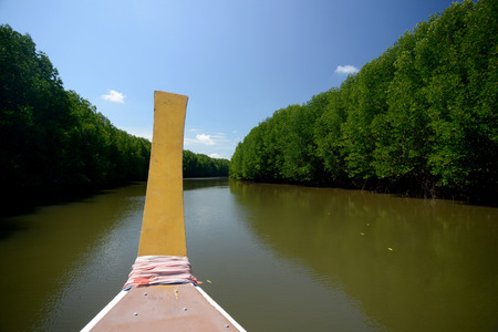 sued: The mangroves at a lagoon near the City of Krabi on the Andaman Sea in the south of Thailand.  Stock Photo