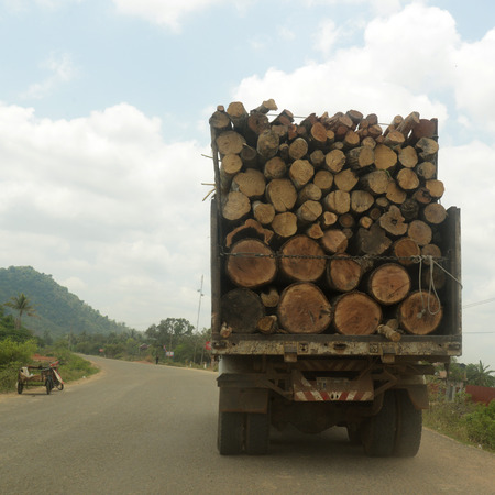 holz: A Transport of Wood near the City of Siem Riep in the west of Cambodia. Editorial