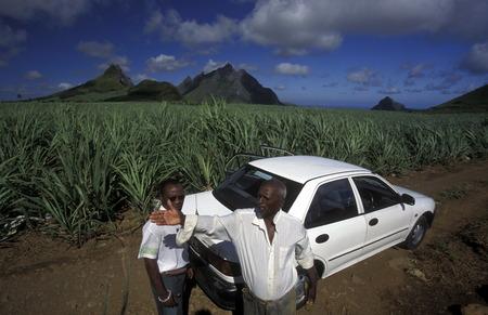 feld: Ein Zuckerrohr Feld oder Plantage im Zentralen Gebierge der Insel Mauritius