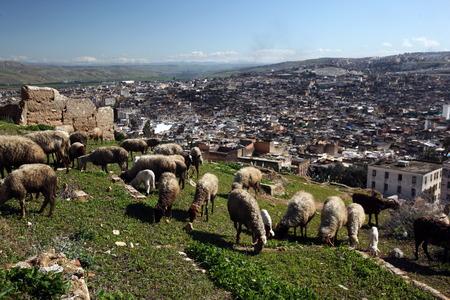 afrique du nord: La m�dina de la vieille ville dans la ville historique de F�s, au Maroc en Afrique du Nord.