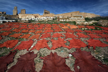 souq: The fresh Leather gets dry on the sun near Leather production in front of the Citywall in the old City in the historical Town of Fes in Morocco in north Africa.