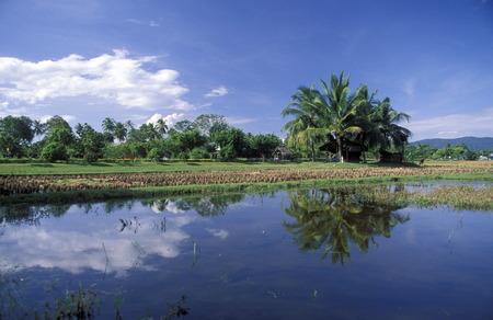 asien: Ein Reisfeld bei Pantai Cenang im westen der Insel Langkawi in Malaysia in Suedost Asien.