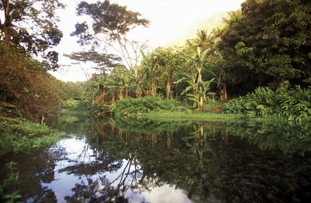 comores: the mountain Landscape on the Island of Anjouan on the Comoros Ilands in the Indian Ocean in Africa.