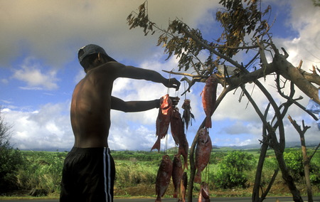 leu: Fish sale on the roat near the city of St Leu on the Island of La Reunion in the Indian Ocean in Africa. Editorial