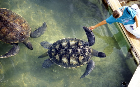 leu: the turtle Farm near the Town of St Leu on the Island of La Reunion in the Indian Ocean in Africa. Editorial