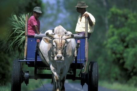 アフリカのインド洋でラ レユニオン島の道路上の xo ワゴン。