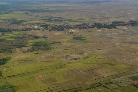 ricefield: The Landscape with a ricefield near the City of Siem Riep in the west of Cambodia. Editorial