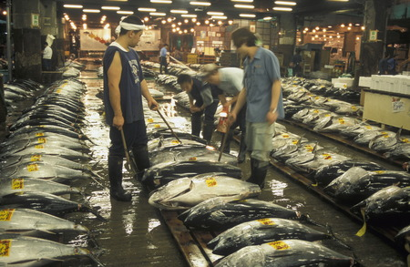 city fish market: Tuna Fish at the Tsukiji Fish Market in the City of Tokyo in Japan in Asia, Editorial