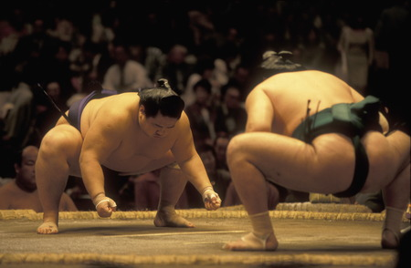 wrestle: a sumo fight in the sumo arena in the City center of Tokyo in Japan in Asia,