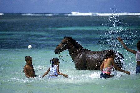 childern play with a horse at the beach at the Village of Las Terrenas on Samanaon in The Dominican Republic in the Caribbean Sea in Latin America.