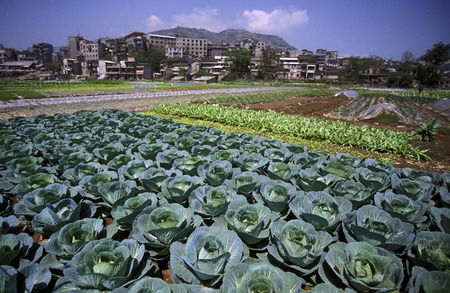 gorges: agro culture in the village of Fengjie at the yangzee river in the three gorges valley up of the three gorges dam project in the province of hubei in china.