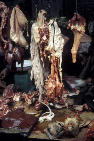 canto: the animal market in the city of Canton or Guangzhou in the north of Hong Kong in the province of Guangdong in China in east asia.