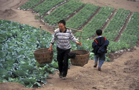 hubei province: agro culture in the village of Fengjie at the yangzee river in the three gorges valley up of the three gorges dam project in the province of hubei in china.