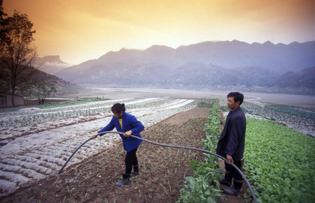 three gorges: agro culture in the village of Fengjie at the yangzee river in the three gorges valley up of the three gorges dam project in the province of hubei in china.